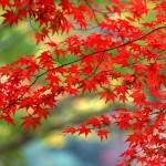 Autumn Term Dates
